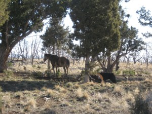 Our first wild horses!