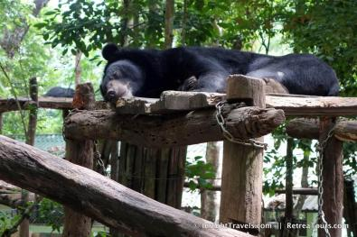 While it's always difficult to see animals in an enclosure, knowing these bears were rescued (and in a very NICE enclosure, to boot) is actually a bit heartwarming.