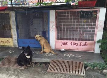 SDC paralyzed street dogs