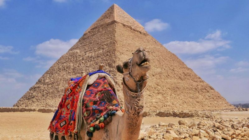 A camel standing in front of a pyramid at giza