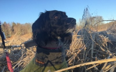 The lessons from the past hunting season form the base for this season