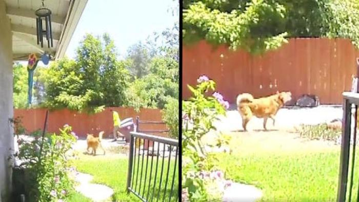 Security Footage Shows Heroic Dog Leading Sanitation Worker To Elderly Owner Who Fell
