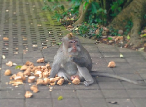 Ubud Monkey Forest3