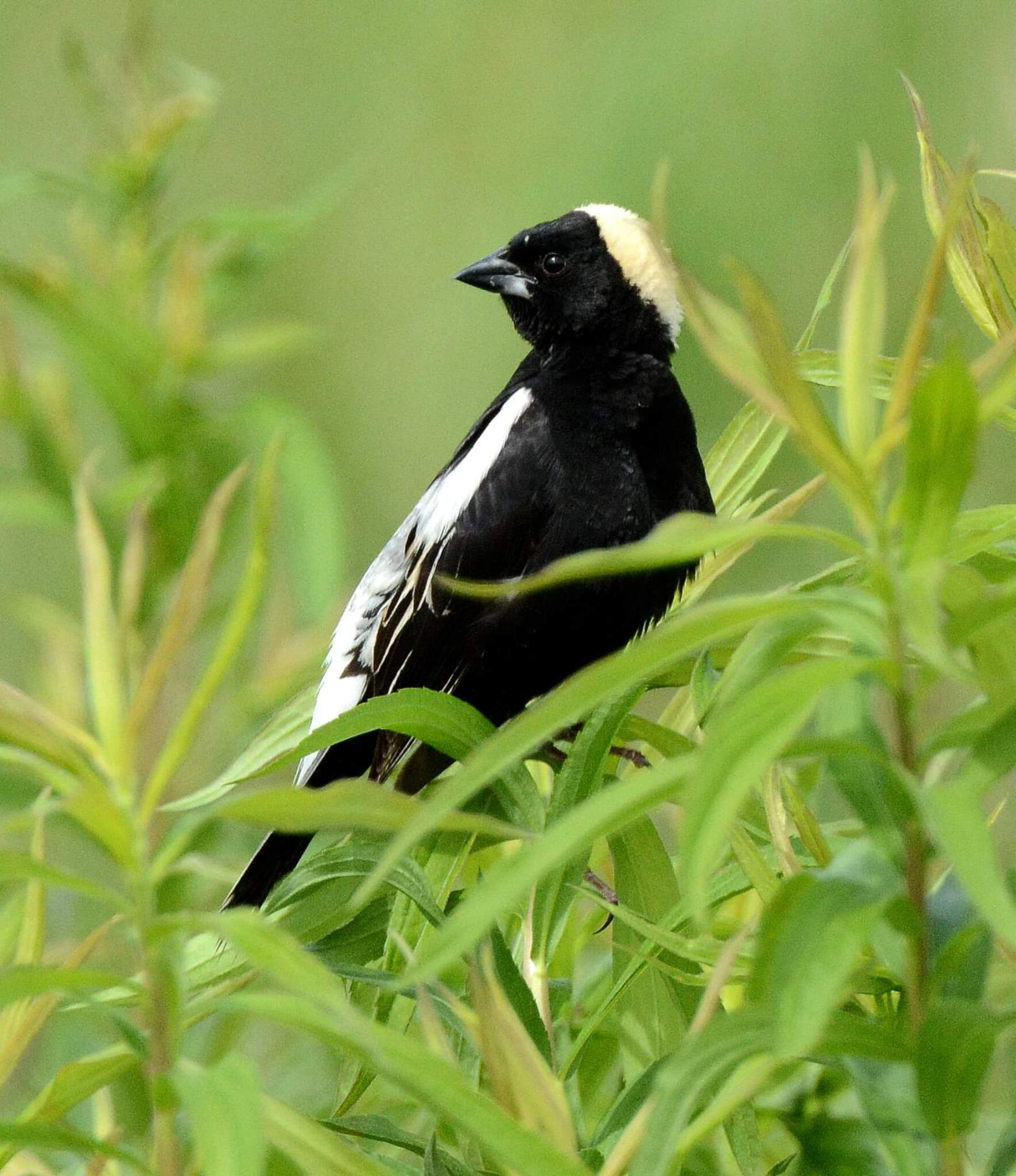 Bird in Foliage