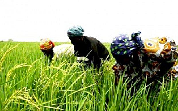 Agriculture-en-casamance