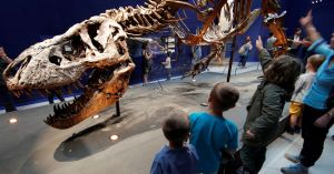 Tracking T. Rex was easy, say Dutch researchers