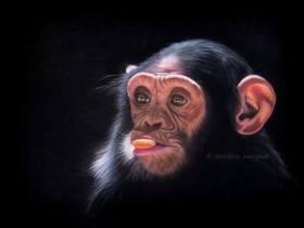 """""""sunny monkey"""" d'après une photo de Nadège Gascon - DISPO"""