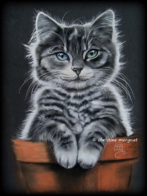 """""""le chat rempoté"""" - DISPO"""
