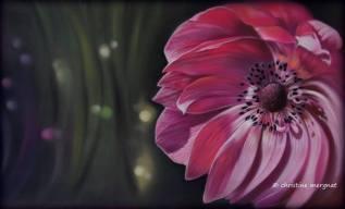 """""""cosmic flower"""" d'après une photo de Julie Milloux - DISPO"""