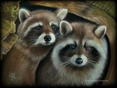 """""""racoon's romance"""" - DISPO"""