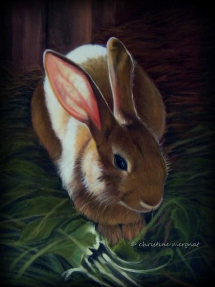 """""""sunny bunny"""" DISPO"""