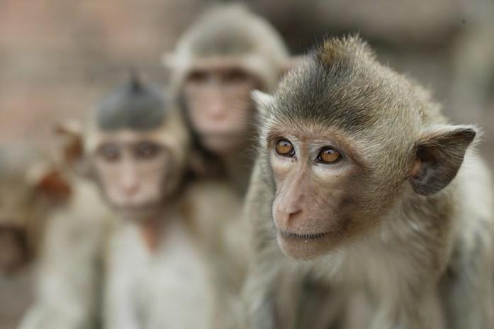 les animaux de Thaïlande