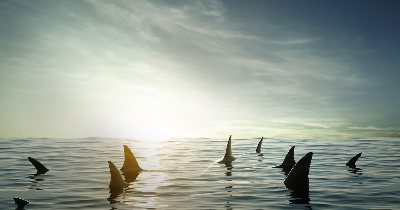 Haie im Ozean