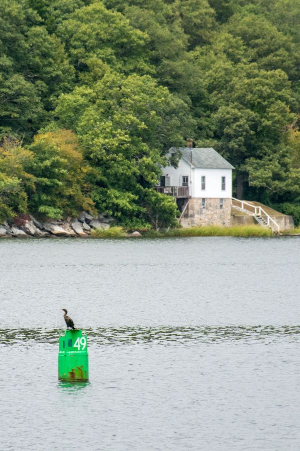 A bird along the Mystic River.