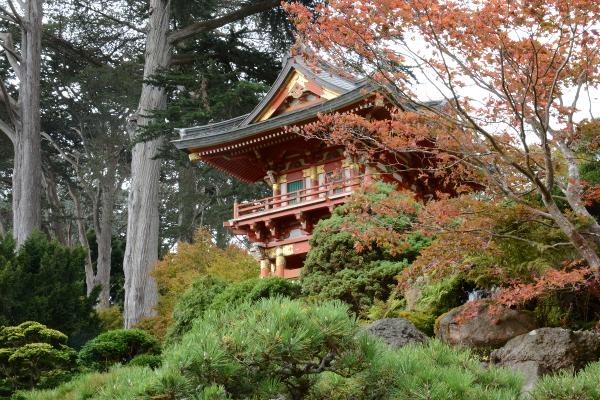 pagoda at the japanese tea garden