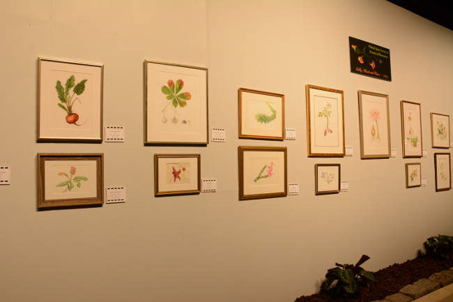 botanical drawings at the philadelphia flower show