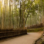 Must See List: Sagano Bamboo Forest