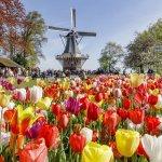Must See List: Keukenhof Gardens