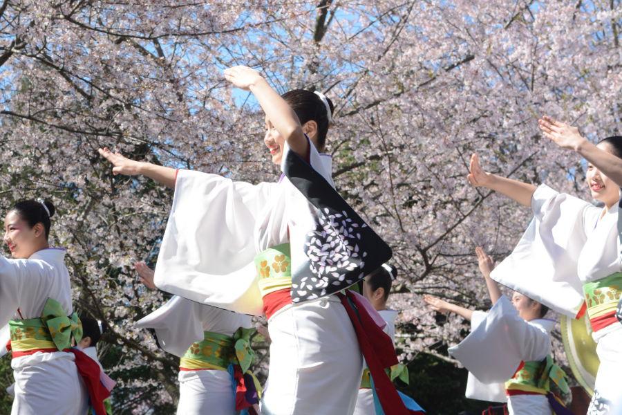Tamagawa University dancers entertain at Philadelphia Sakura Sunday.