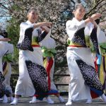 Sakura Sunday Celebrates Philadelphia's Cherry Blossoms