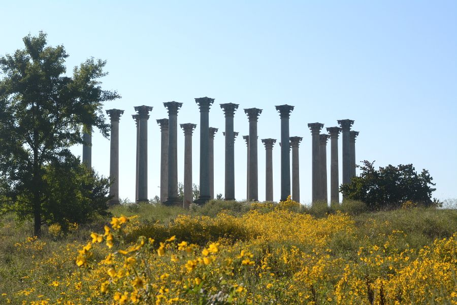 Capitol Columns on the Eclipse Meadow at the National Arboretum.