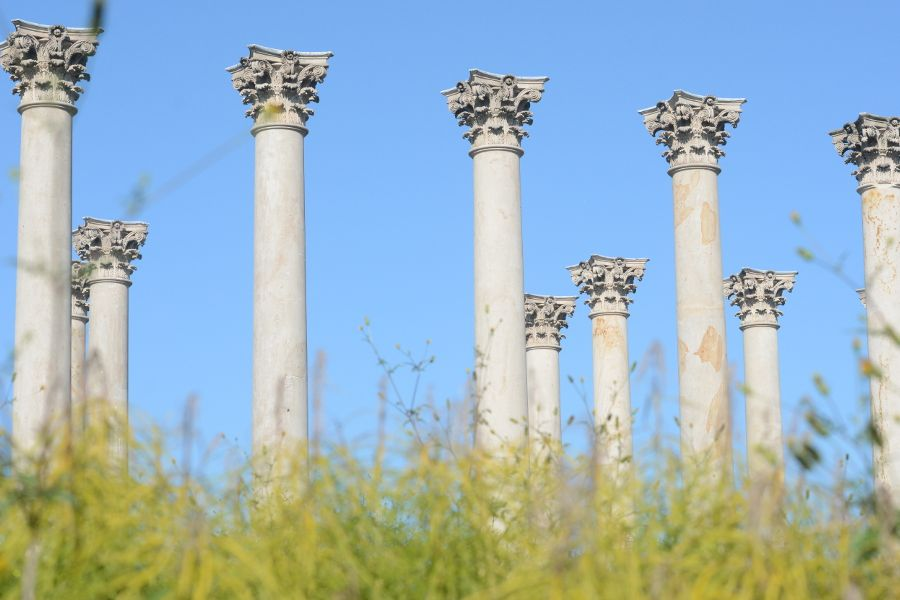 Capitol Columns and flowers at the National Arboretum.