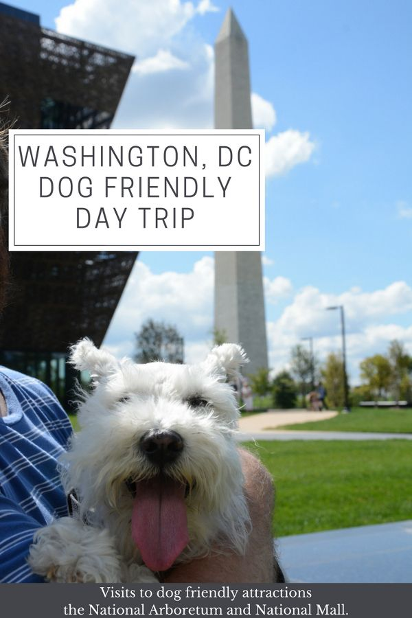 Washington, DC dog friendly day trip at National Arboretum and National Mall.