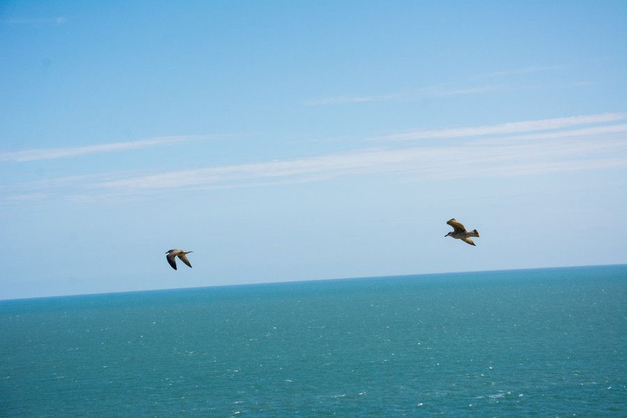 Two seagulls soar over the Irish Sea along the Howth cliff.