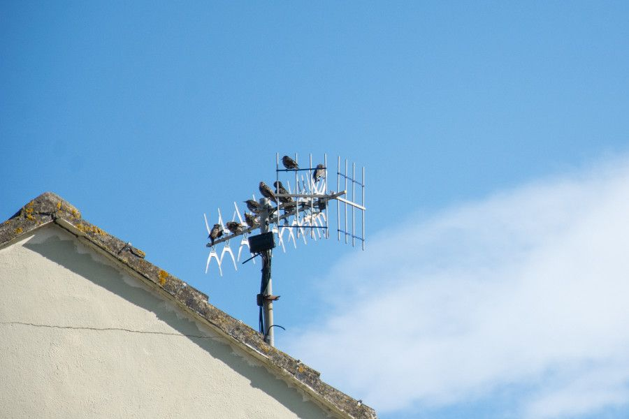 Birds on the antenna of a home in Howth, Ireland.