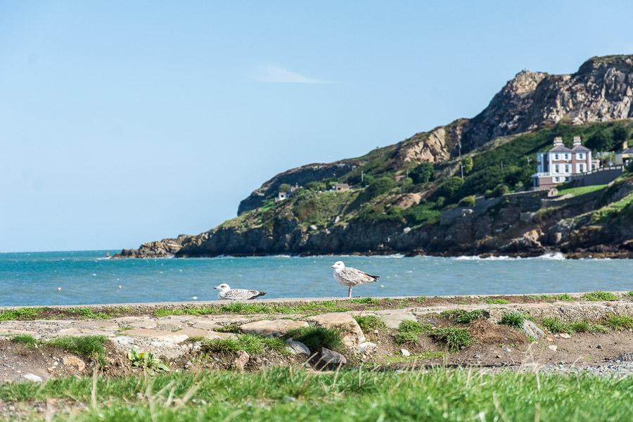 Two seagulls relax at Balscadden Bay Beach.