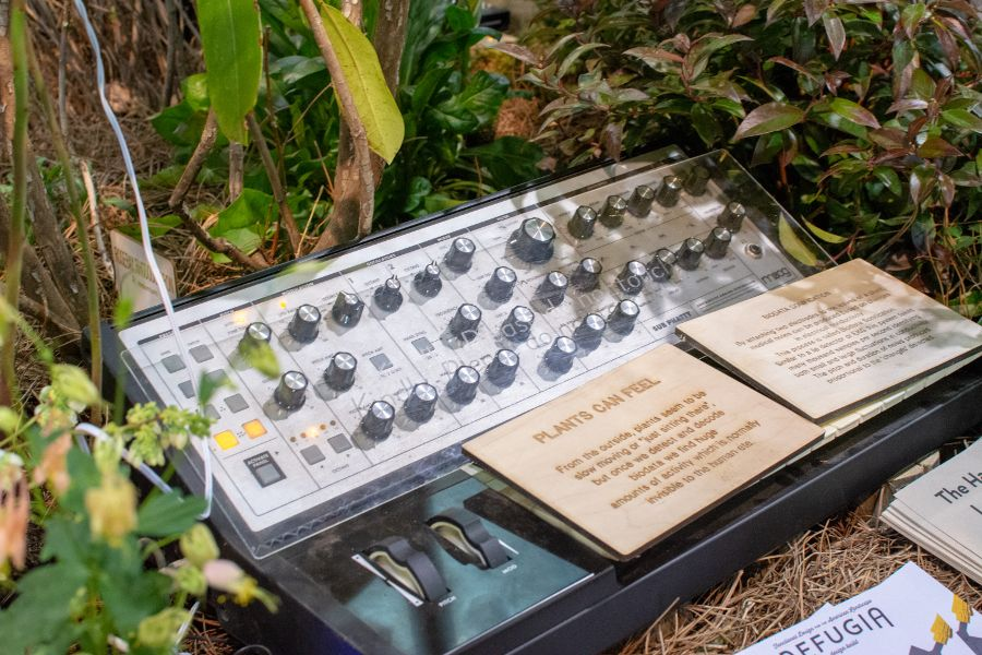 Plants Can Feel makes music using the pulse of plants using instruments like an analog synthesizer.