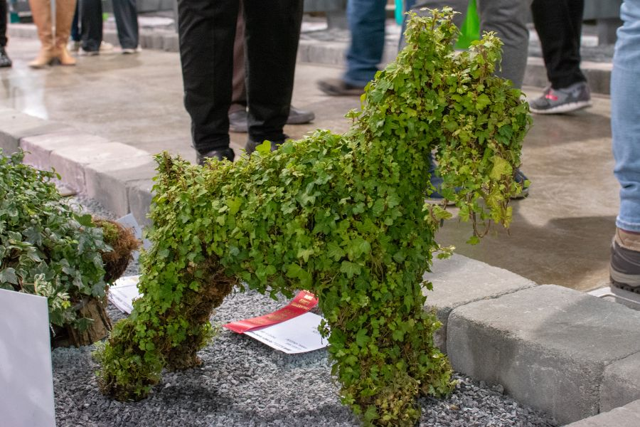 An award-winning schnauzer topiary at the Flower Show.