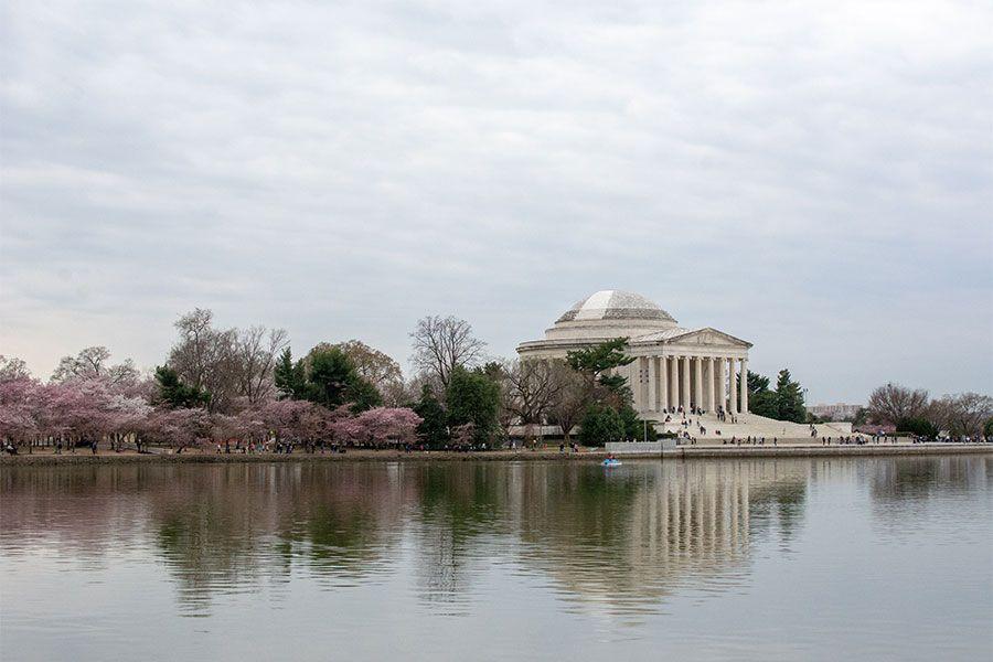 The Jefferson Memorial nestled among Washington, DC cherry blossoms.