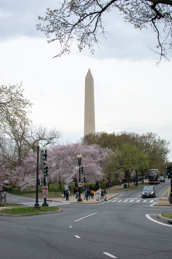 Cherry blossoms surround the Washington Memorial on the National Mall.