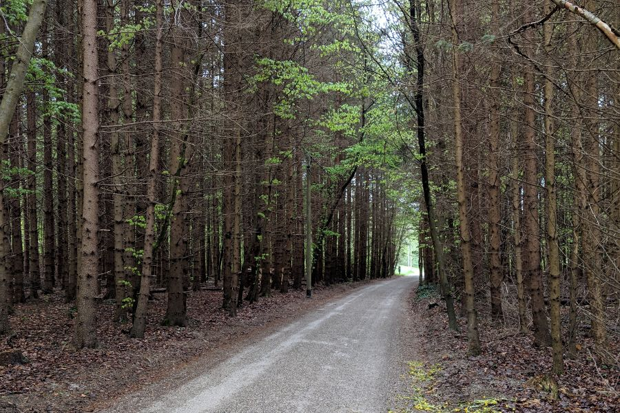 A wooded trail in Herrsching, Germany.