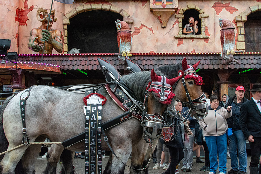 Two horses pull the Paulaner parade float onto the Wiesn at Munich Frühlingsfest.