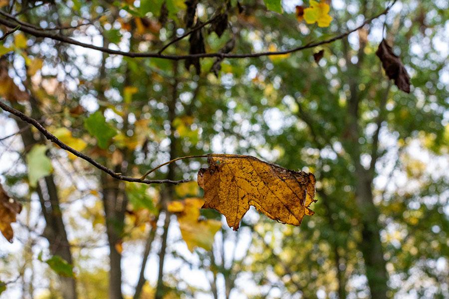 Fall foliage in Philadelphia.