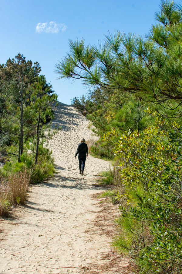 Walking through the wooded ecosystem at Jockey's Ridge State Park.