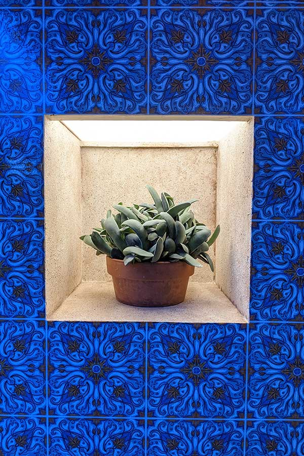 A potted succulent sits in an alcove surrounded by blue tiles.