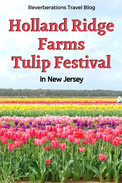 Be transported to the Netherlands with a visit to New Jersey's Holland Ridge Farms Tulip Festival for acres of beautiful tulips! Updates for 2020 Tulip Trail. #tulips #tulipfestival #newjersey