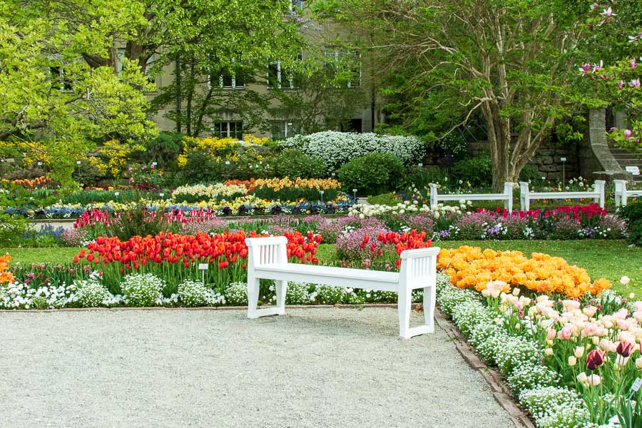 A bench surrounded by spring flowers at Munich Botanical Garden.