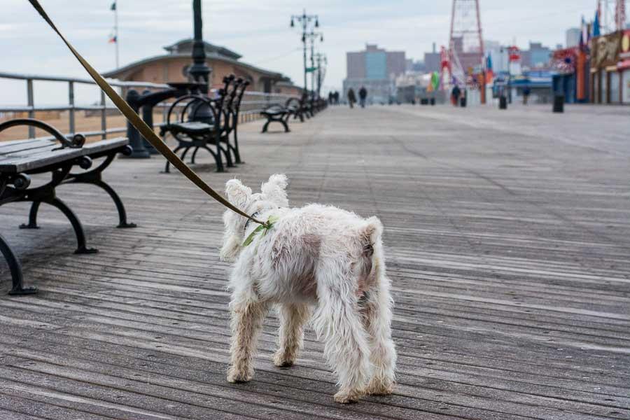 The Coney Island boardwalk is dog friendly.