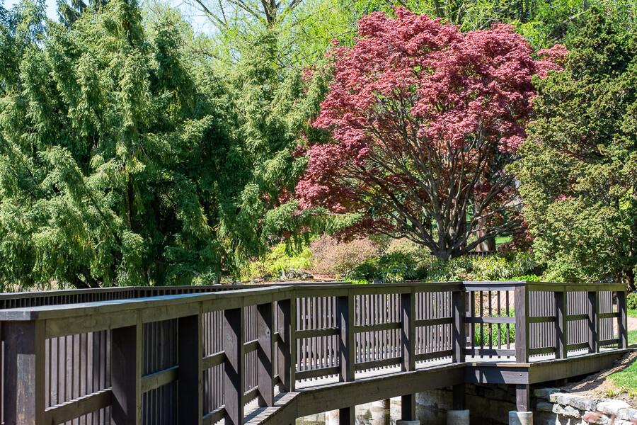 A wooden walkway runs through the Japanese garden.