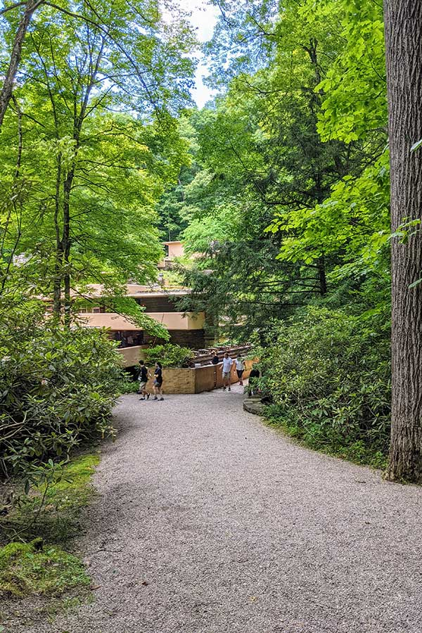 A path of crushed stone leads between the trees to Fallingwater.