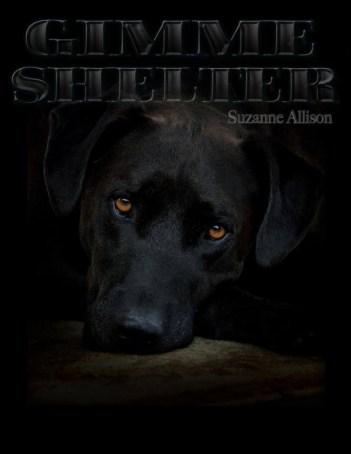 LaLuzdeJesus_gimme-shelter