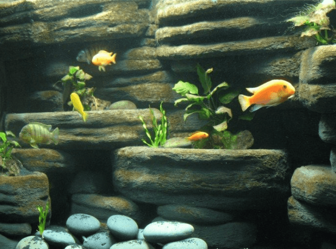 Aquarium Background Ideas
