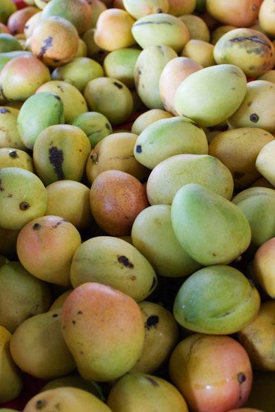La mangue d'Australie