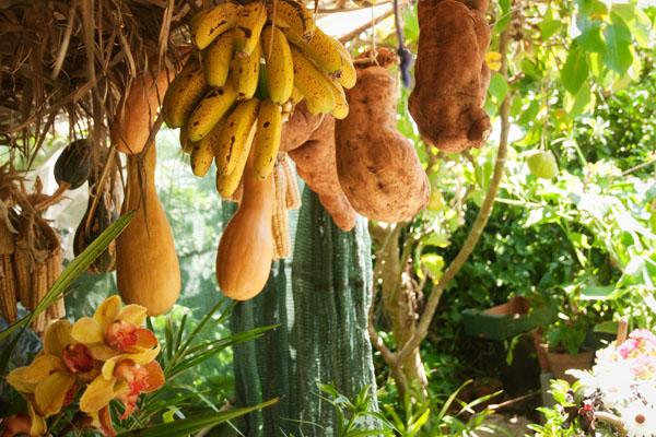 Fruits de Madère