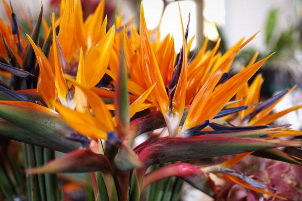 Fleurs de Madère