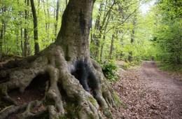 Forêt de Ville d'Avray
